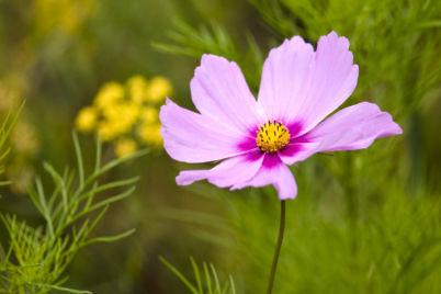 flower-3.jpg