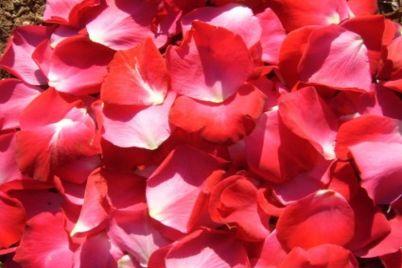 mawar-8.jpg