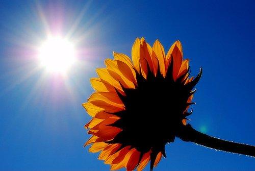 sunshine1-1.jpg
