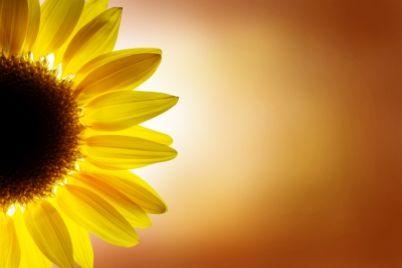 Flower-and-sunshine.jpg